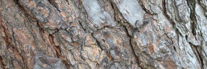 Bark Texture Pack