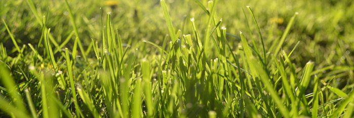 Free Grass Wallpaper