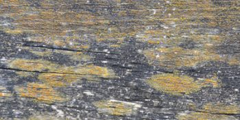 Free Textures Collection 1